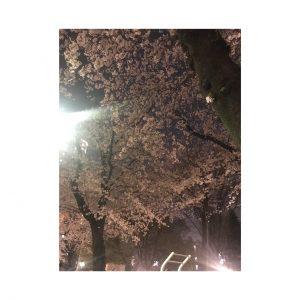 夜桜みました☆+゜