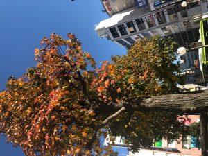 秋冬カラーおすすめ!