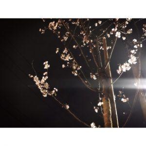 桜の季節☆.*