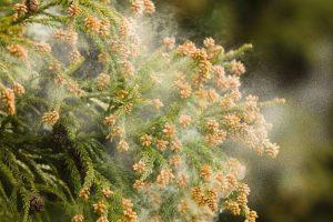 花粉症と髪の毛