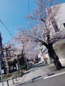 桜が満開に♪**新生活もそろそろSTART