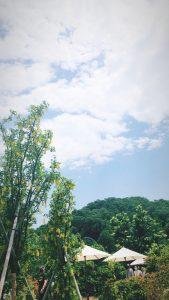 《栃木のあしかがフラワーパークへ♪**》